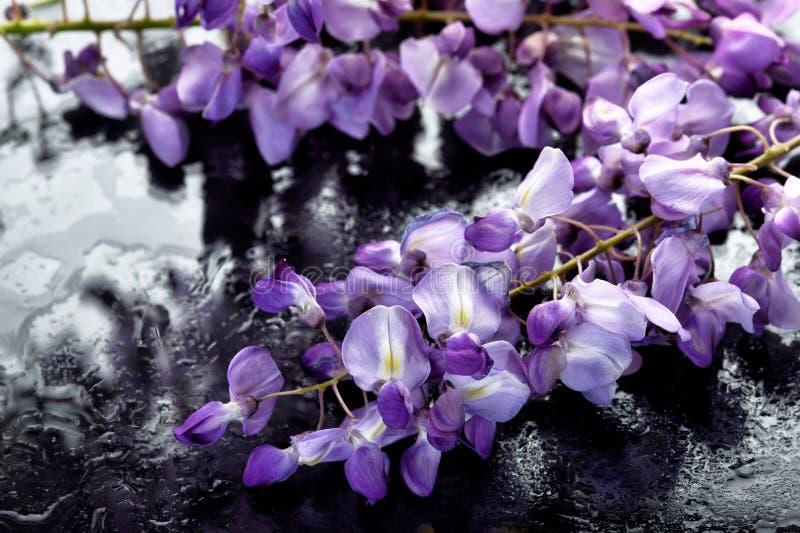 El concepto de flores de macro belleza LXXIII fotografía de archivo libre de regalías