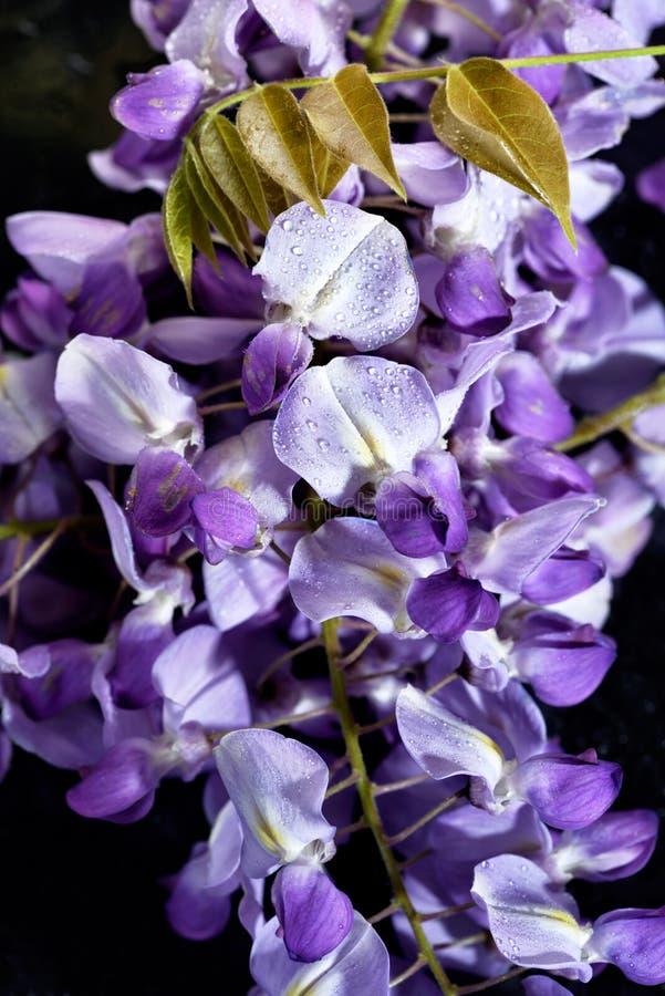 El concepto de flores de macro belleza LXXIX foto de archivo