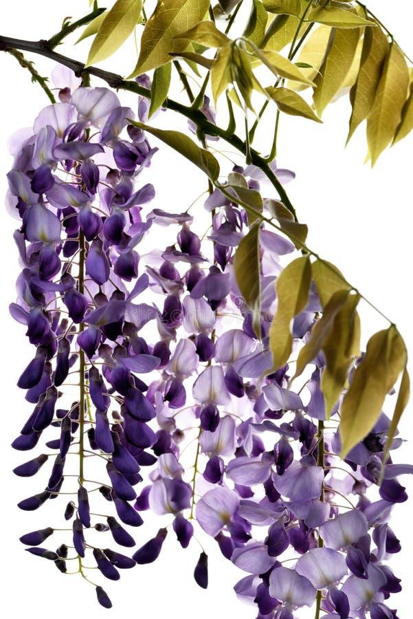 El concepto de flores de macro belleza LXXXI fotografía de archivo libre de regalías