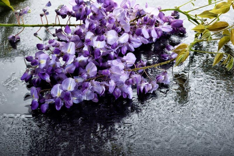 El concepto de flores de macro belleza LXXXII fotos de archivo