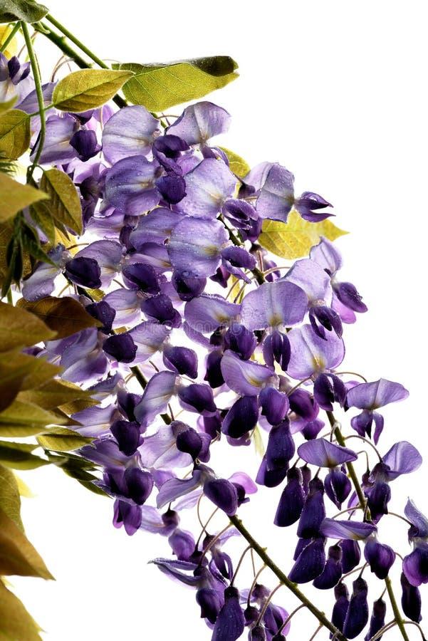 El concepto de flores de macro belleza LXXXIII imágenes de archivo libres de regalías