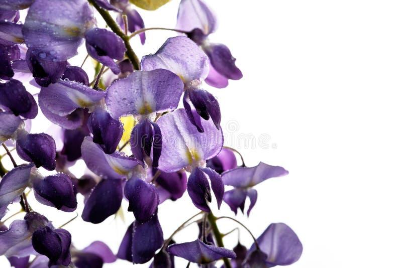 El concepto de flores de macro belleza LXXXX imagen de archivo