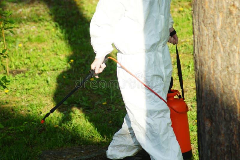 El concepto de gestión, de insectos y de ácaros del parásito Tratamiento químico y protección contra las termitas, cucarachas imagen de archivo