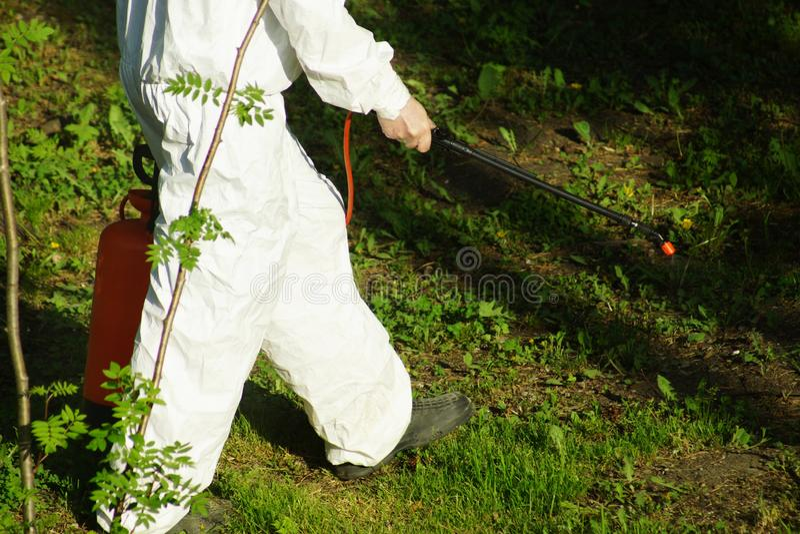 El concepto de gestión, de insectos y de ácaros del parásito Tratamiento químico y protección contra las termitas, cucarachas foto de archivo