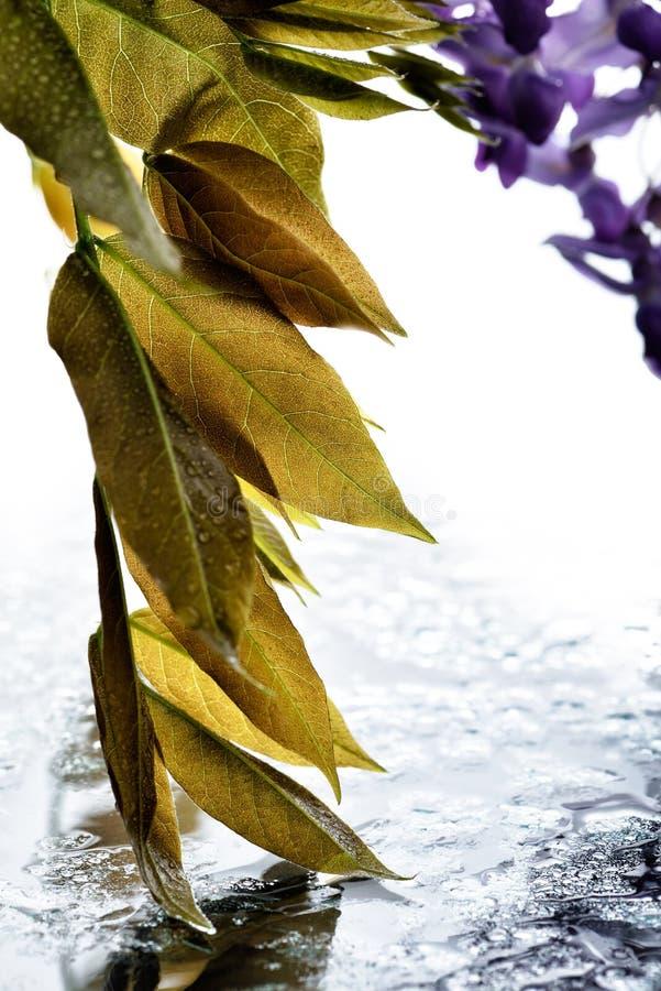El concepto de las flores macro-bellas LXXXIX fotos de archivo