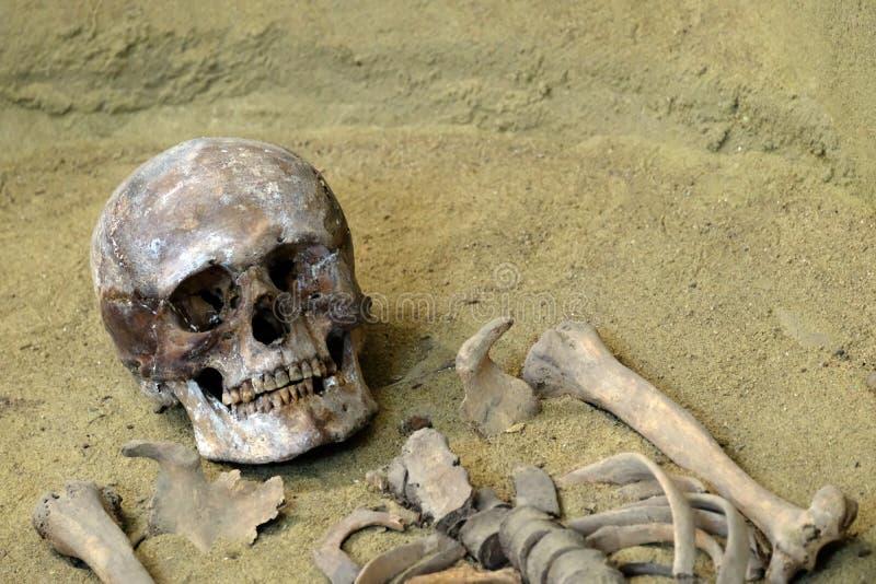 El concepto de muerte y de exhumación El cráneo y los huesos humanos en la arena Excavaciones arqueológicas foto de archivo