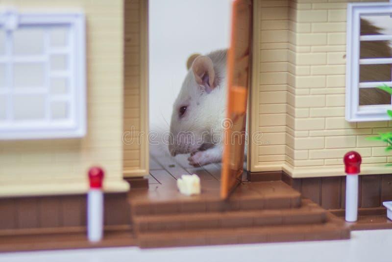 El concepto de un extranjero en la casa Rat?n en el apartamento fotografía de archivo