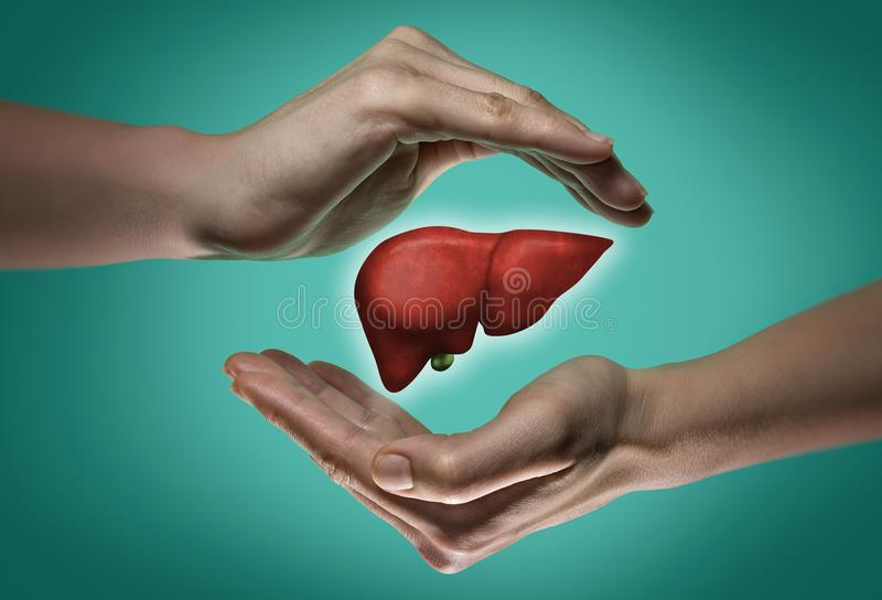 El concepto de un hígado sano fotografía de archivo libre de regalías