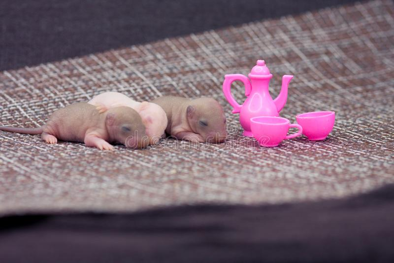 El concepto de una fiesta del t? del rat?n Poco ratas con los platos del bebé imagen de archivo libre de regalías