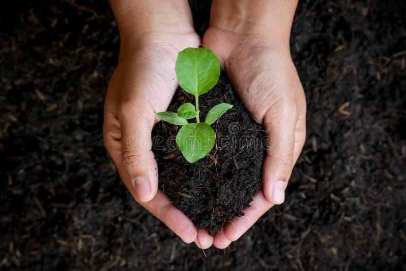 El concepto del crecimiento, manos está plantando los almácigos en el suelo fotografía de archivo