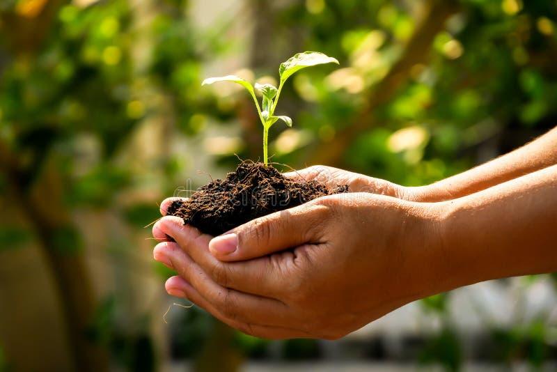 El concepto del crecimiento, manos está plantando los almácigos en el suelo fotos de archivo