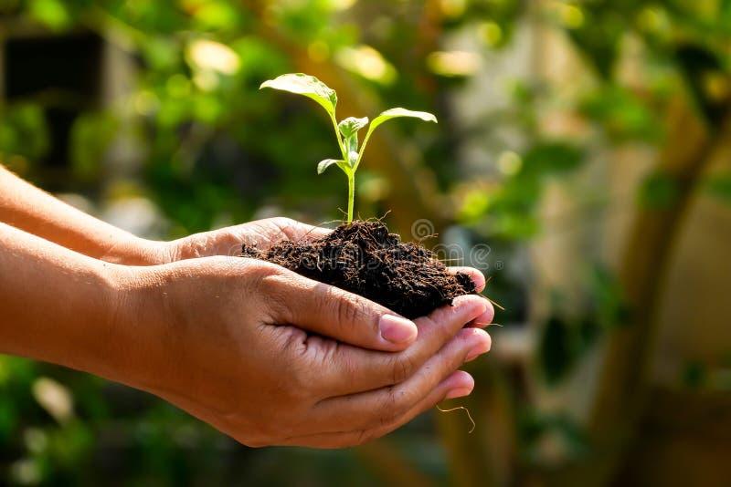 El concepto del crecimiento, manos está plantando los almácigos en el suelo foto de archivo libre de regalías