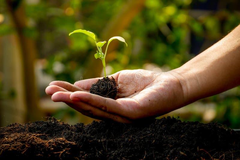 El concepto del crecimiento, manos está plantando los almácigos en el suelo imagen de archivo