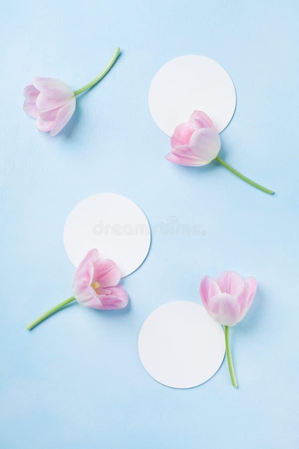 El concepto del planeamiento o de la invitación con el tulipán rosado fresco florece en fondo en colores pastel azul Visión super fotos de archivo libres de regalías