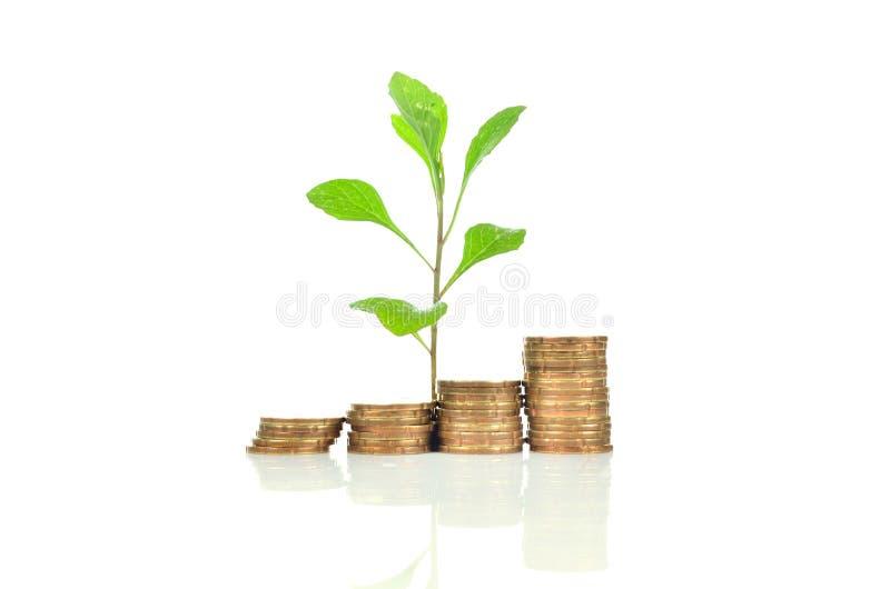 El concepto financiero del crecimiento, apila la moneda de oro foto de archivo