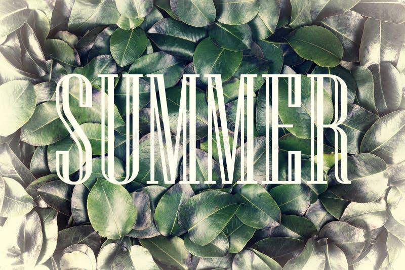 El concepto: naturaleza del verano, vacaciones de verano, viaje El verano de la inscripción en un marco blanco contra un fondo de imagenes de archivo