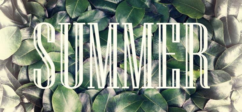 El concepto: naturaleza del verano, vacaciones de verano, viaje El verano de la inscripción en un marco blanco contra un fondo de fotografía de archivo libre de regalías