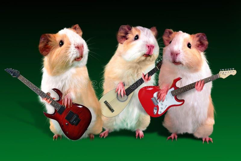 El conejillo de Indias de tres guitarristas está jugando en una guitarra foto de archivo libre de regalías