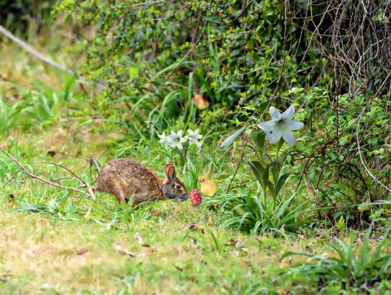 El conejito celebra la estación de Pascua con su amigo fotos de archivo