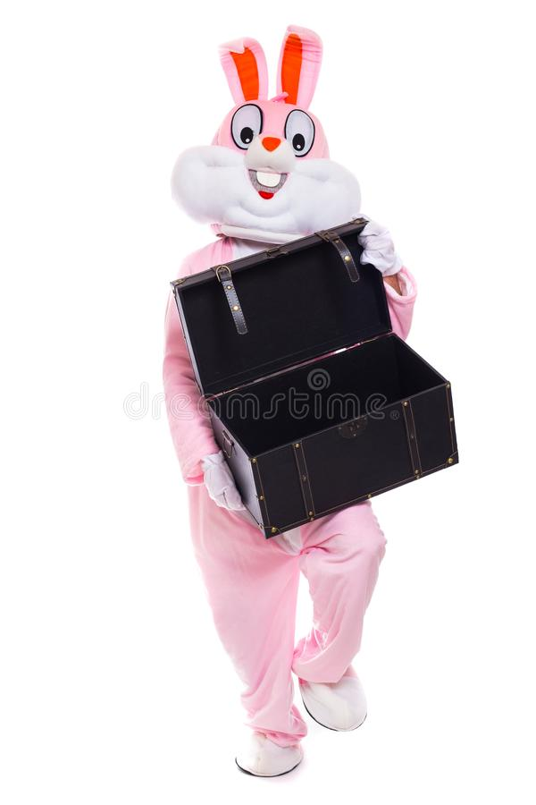 El conejito de pascua sostiene la caja de regalos o el conejo de tamaño natural del pecho celebra pascua fotos de archivo libres de regalías