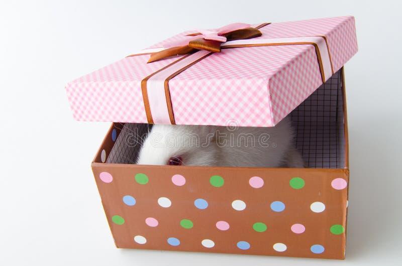 El conejo blanco en caja de regalo en el concepto de pascua foto de archivo