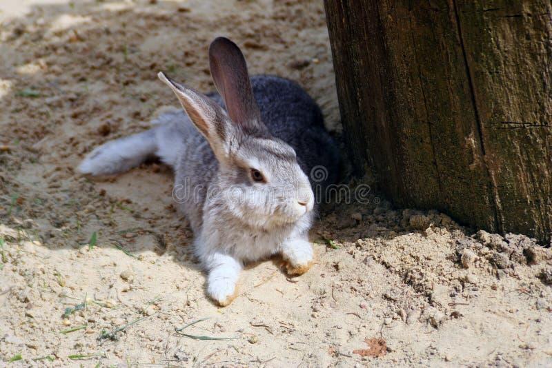 El conejo espigado lanzó las piernas y ocultó en la sombra imagen de archivo