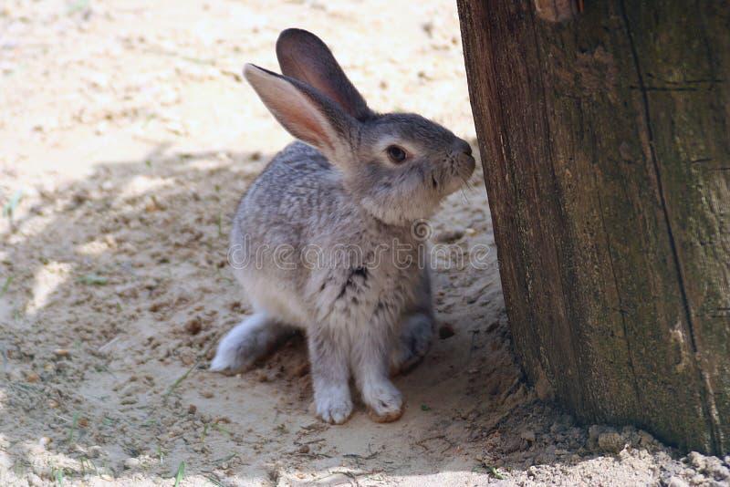 El conejo espigado ocultó en la sombra fotografía de archivo libre de regalías