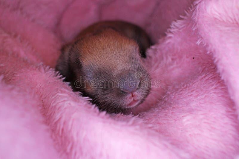 El conejo lindo del bebé del conejito poda el equipo Conejitos recién nacidos imagen de archivo libre de regalías