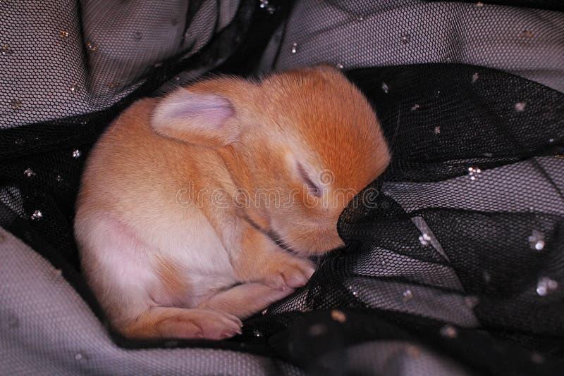 El conejo lindo del bebé del conejito poda el equipo Conejitos recién nacidos foto de archivo