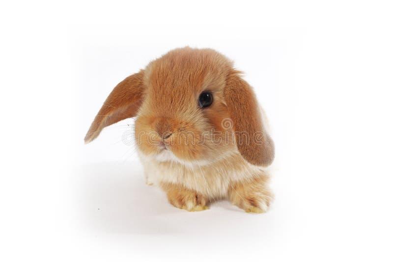El conejo lindo del bebé del conejito poda el equipo Conejitos recién nacidos imagenes de archivo