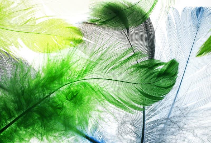 El contexto natural de la hada hermosa coloreó brillantemente la pluma fotos de archivo libres de regalías