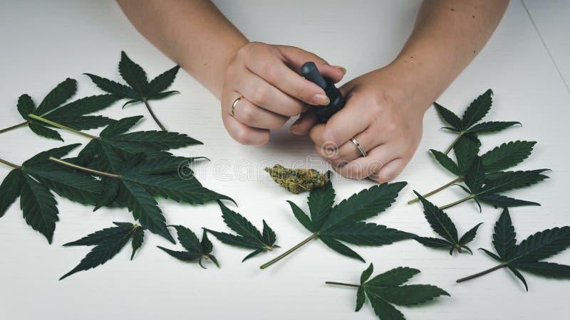 El control de la persona joven en su aceite del cáñamo de la mano Brotes y hojas de la marijuana El cáñamo es un concepto de medi imagen de archivo libre de regalías