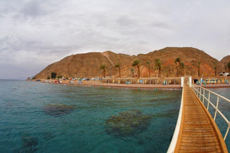 El coral laborea en la costa fotografía de archivo