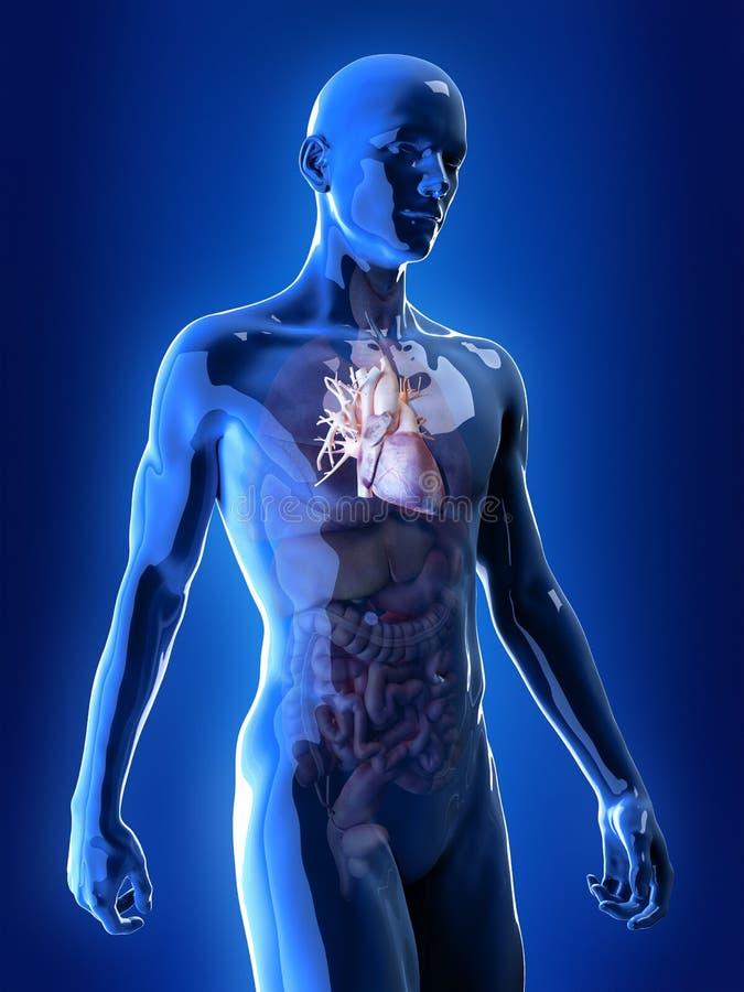 El corazón ilustración del vector