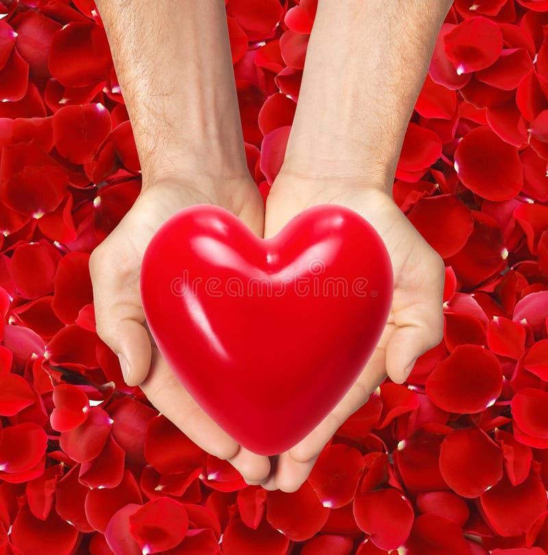 El corazón rojo en hombre entrega los pétalos color de rosa rojos foto de archivo libre de regalías