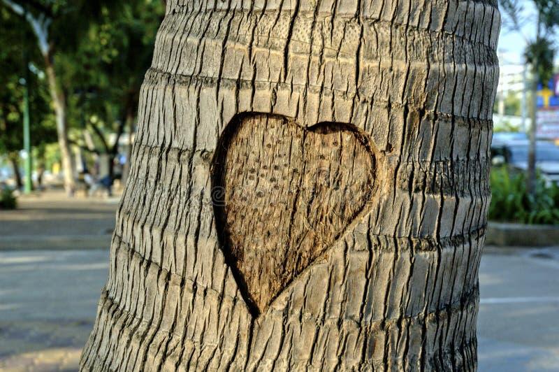 El corazón talló en la palmera foto de archivo
