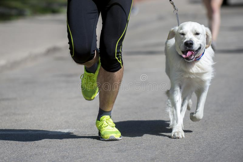El corredor irreconocible y un perro en la ciudad compiten con imagenes de archivo