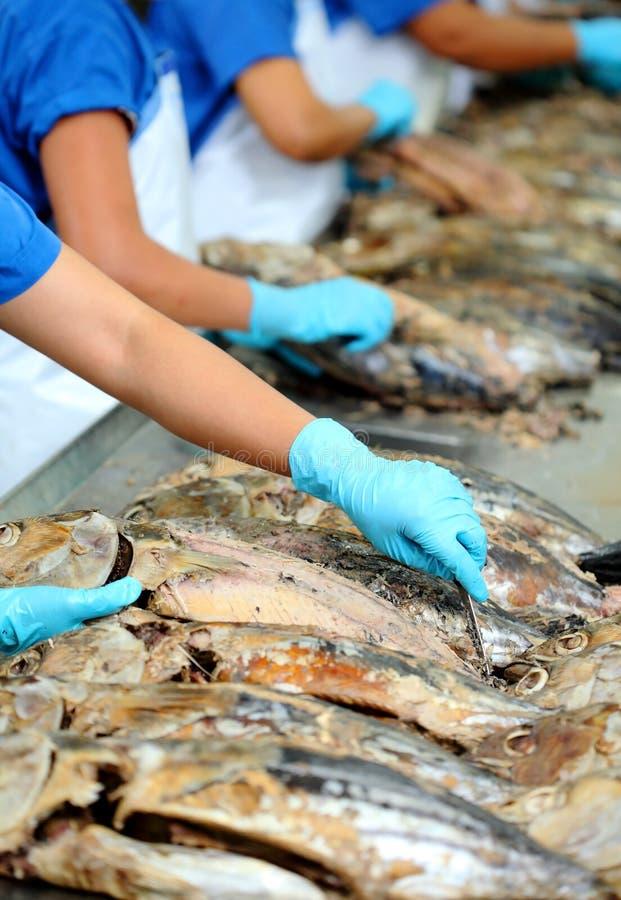 El corte de un pescado de atún en fábrica fotos de archivo