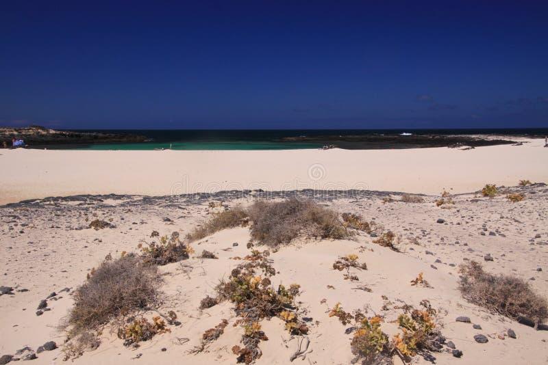 El Cotillo, norr Fuerteventura: Sikt över den ljusa vita sandstranden på turkoslagun av strandLaconchaen mot djupblå himmel royaltyfri foto