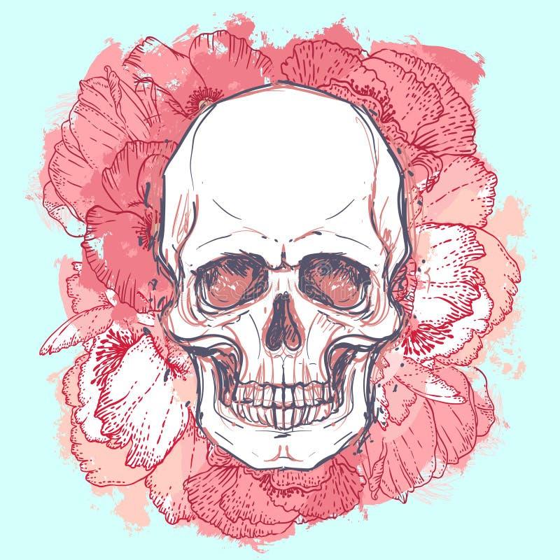 El cráneo con la peonía, color de rosa humanos y la amapola florece en el CCB de la acuarela ilustración del vector