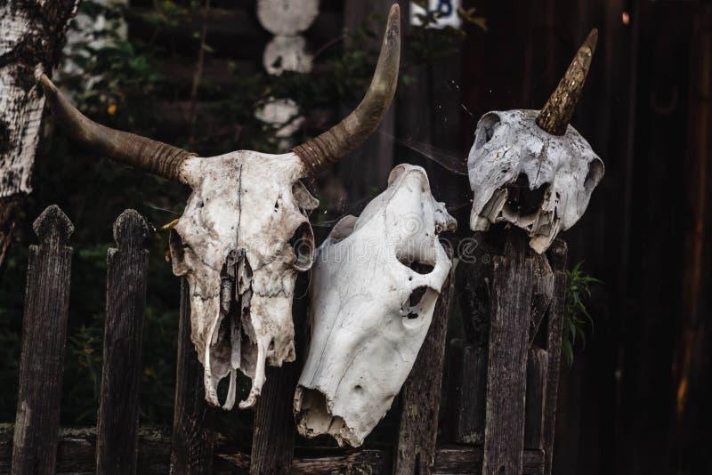 El cráneo de una vaca, una oveja y un unicornio cuelgan en una cerca imagen de archivo