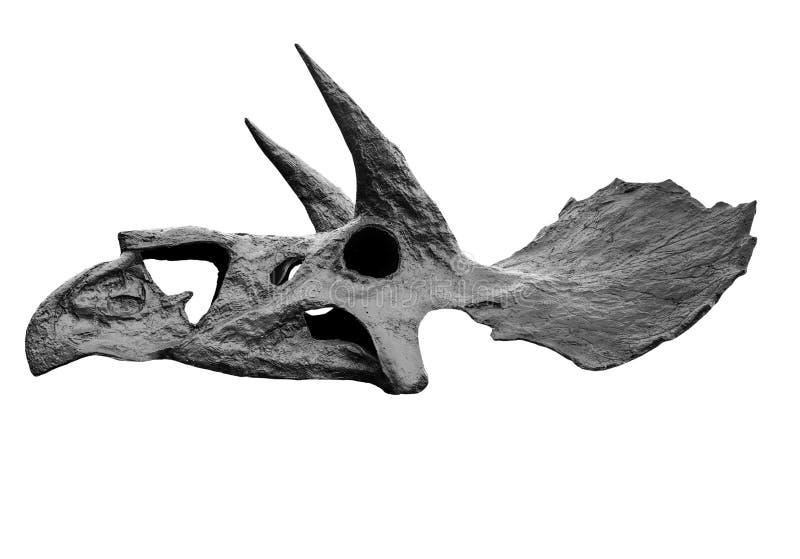 El cráneo del triceratops del dinosaurio en blanco, aislado fotos de archivo