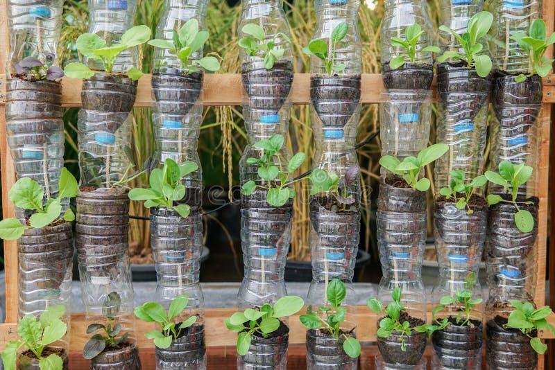 El crecimiento de verduras adentro recicla las botellas plásticas imagen de archivo