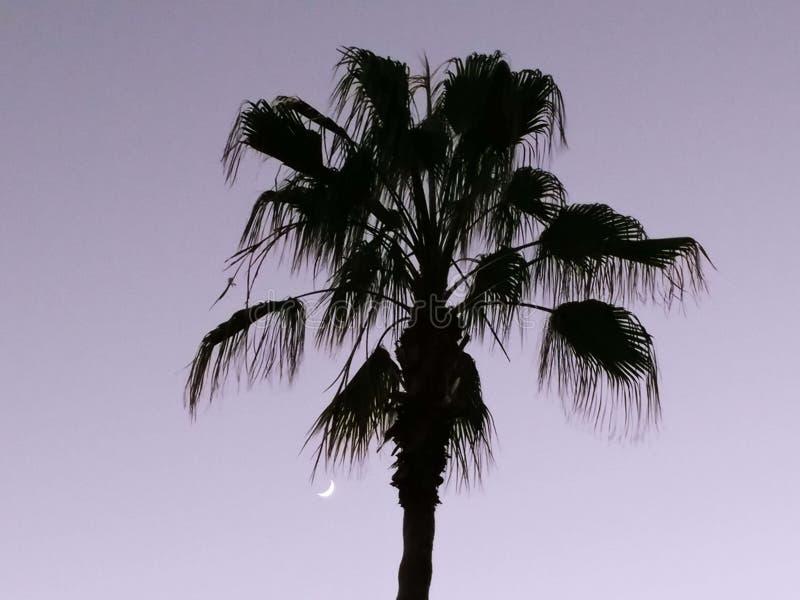 El crepúsculo con una Luna Nueva y una palmera como noche desciende imágenes de archivo libres de regalías