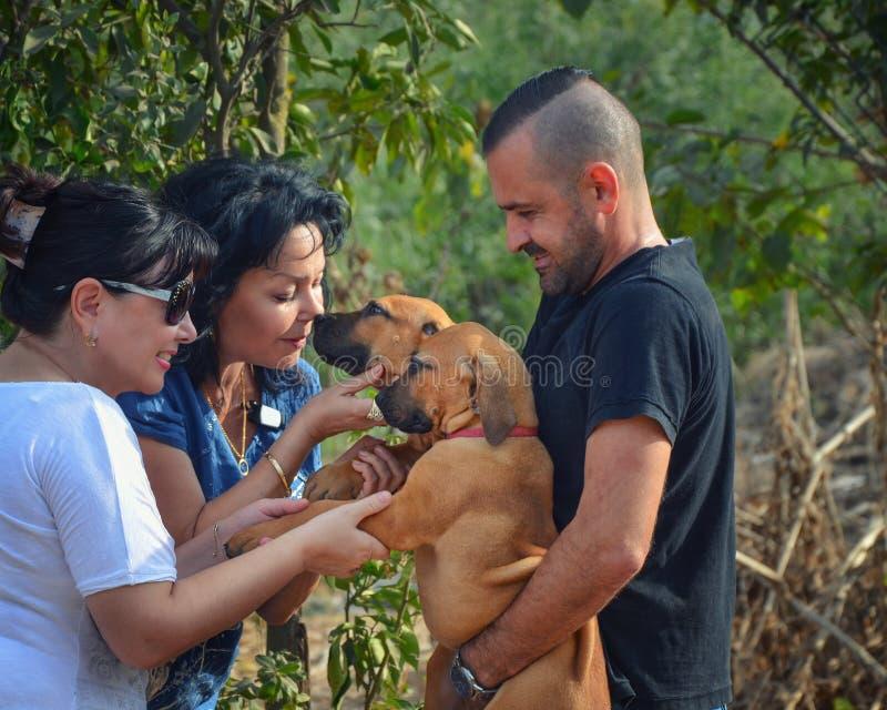 El criador surafricano del mastín sostiene dos perritos marrones fotografía de archivo