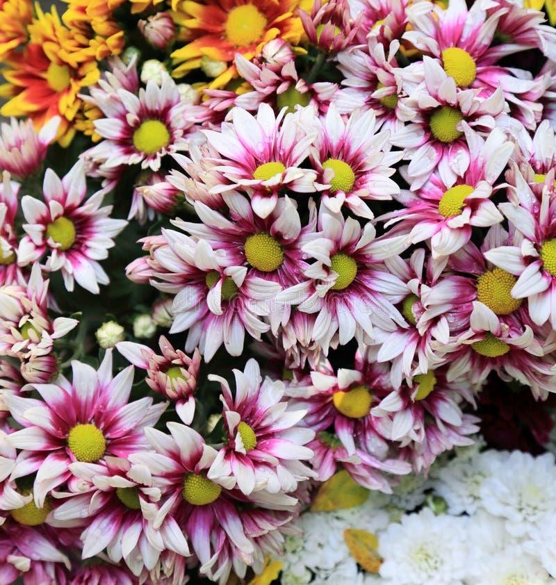 El crisantemo colorido florece el ramo para el fondo fotos de archivo
