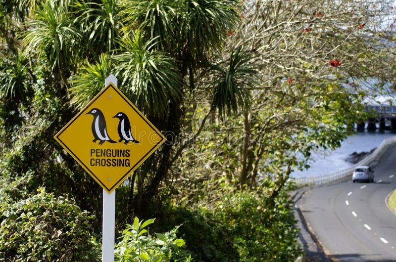 El cruzar de los pingüinos foto de archivo libre de regalías