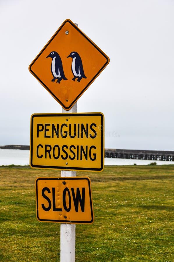 El cruzar de los pingüinos firma adentro Oamaru, Nueva Zelanda imágenes de archivo libres de regalías