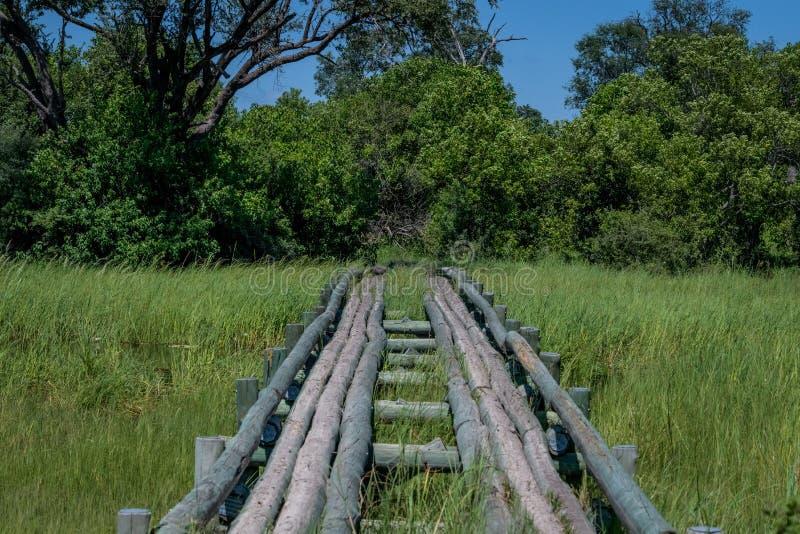 El cruzar en el bosque fotos de archivo libres de regalías