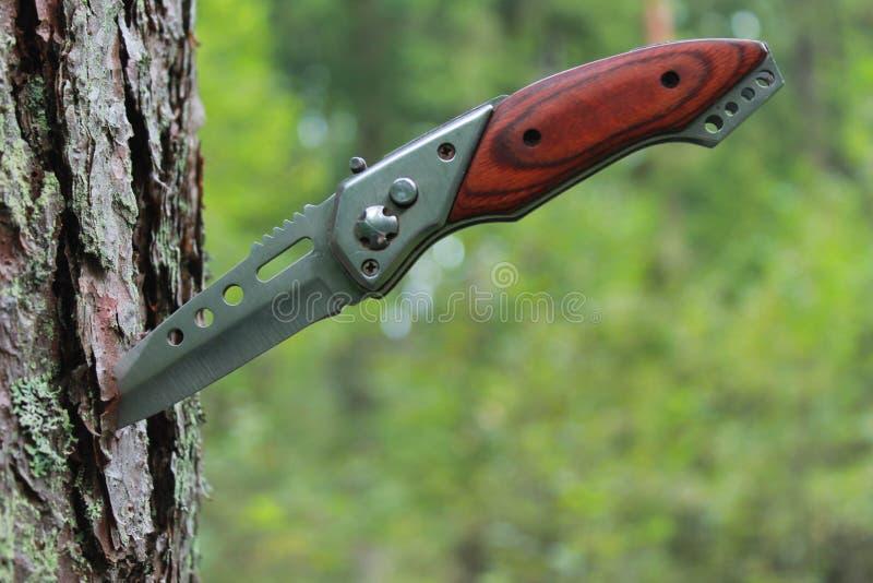 El cuchillo viejo se pegó en un árbol de pino imagen de archivo libre de regalías